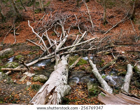 fallen dead tree in the forest, autumn - stock photo