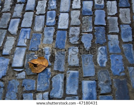 Fallen leaf on blue brick street - stock photo