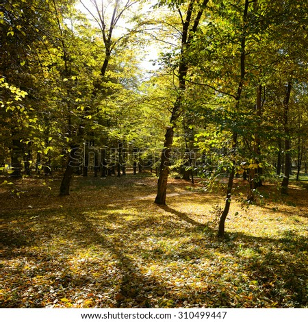 Fallen leaves in autumn forest - stock photo
