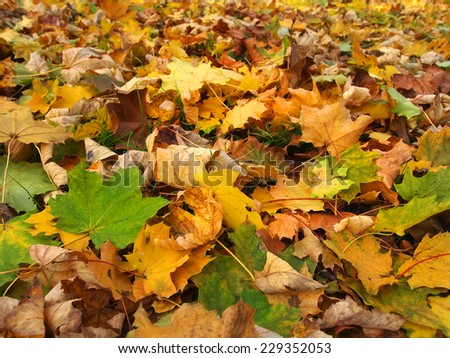 fallen leaves in autumn park at sunny weather         - stock photo