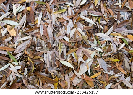 Fallen leaves on the ground in late fall - stock photo
