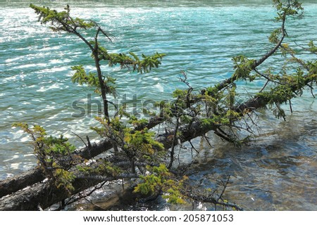 Fallen tree and river with a rapid current (Alberta, Canada)  - stock photo