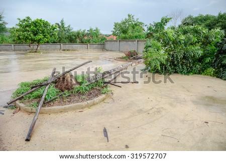 Fallen tree by storm in rainy season - stock photo