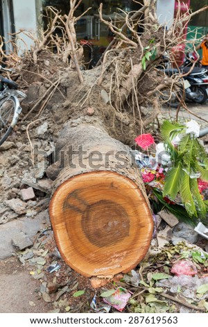 Fallen tree damaged on street by natural heavy wind storm in Hanoi street. Tree body cut  - stock photo