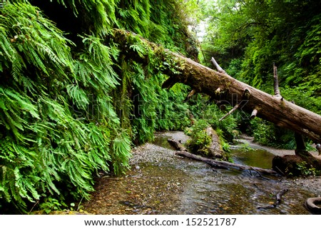 Fallen tree in Fern Canyon California - stock photo