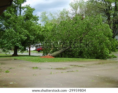 Fallen tree Marion, Ill. derecho 5/8/09 - stock photo