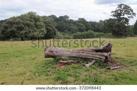 Fallen Tree Trunk in a Field near the Rural Village of Montacute in Somerset, England, UK - stock photo