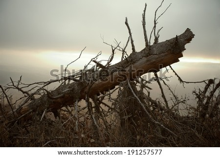 Fallen tree with a evening light in the background - stock photo