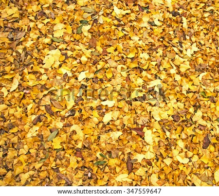 Fallen yellow leaves in autumn - stock photo