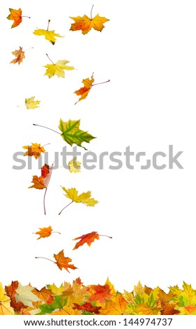 Falling autumn leaves isolated on white background. - stock photo