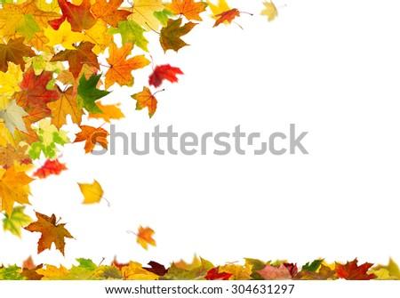 Falling autumn maple leaves, isolated on white background. - stock photo