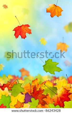 Falling colorful autumn leaves against blue sky - stock photo