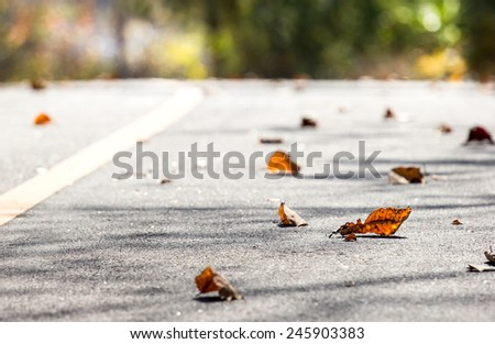 Falling down forest in autumn.Leafage falling down on road. - stock photo