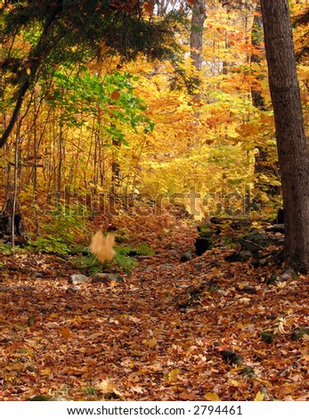 Falling leaves in maple forest - stock photo