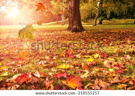 falling leaves of autumn tree and sunshine - stock photo