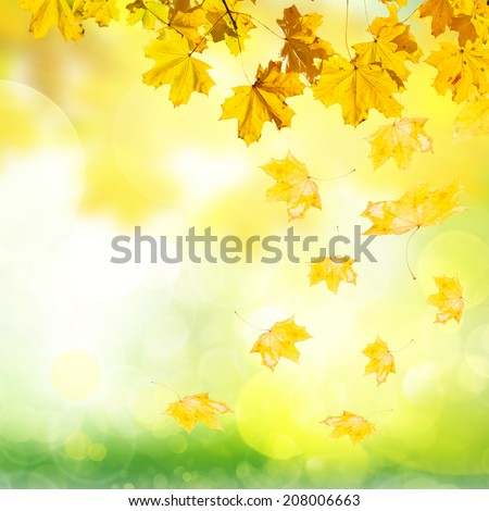falling yellow leaves and grass  bokeh background with sun beams - stock photo