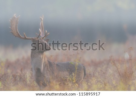 fallow deer in the mist - stock photo