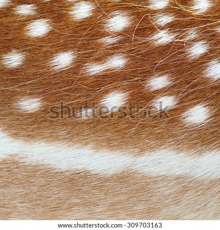 fallow deer real pelt, colorful animal fur  texture - stock photo