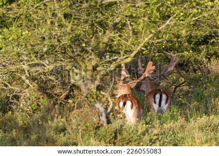 Fallow deer stags in a woods - stock photo