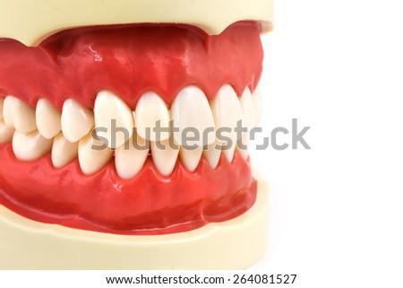 false tooth gum isolate on white background - stock photo