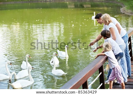 Families with children feeding white swans - stock photo