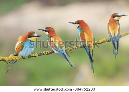 Family colored bird resting on a tree - stock photo