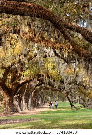 Family enjoying time together on vacation, they walking in the beautiful oak trees park, South Carolina, USA. - stock photo