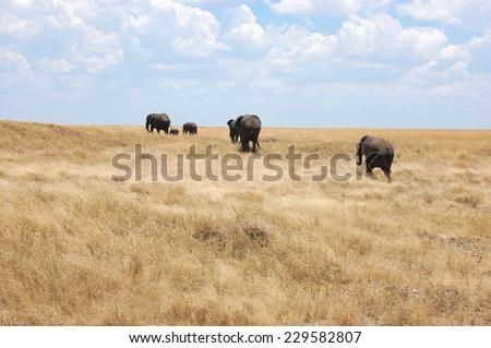 Family group of elephants in Serengeti National Park, Africa - stock photo
