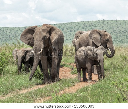 Family of african elephant on the Masai Mara National Reserve - Kenya, East Africa - stock photo