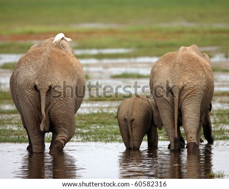 Family of African Elephants - stock photo