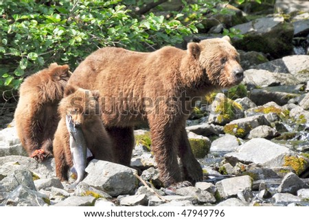 family of bears on fishing trip - stock photo