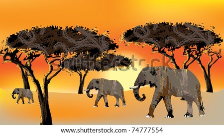 family of elefants against the backdrop of the African sunset - stock photo