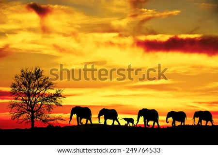 family of elephants walking - stock photo