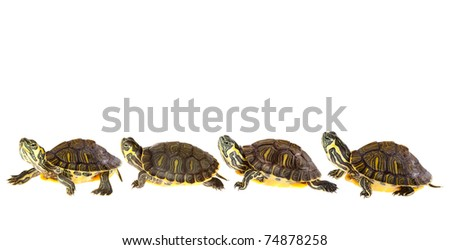 Family of funny green turtles on parade or walking around - stock photo