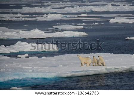 Family of polar bears on an iceberg, Greenland - stock photo