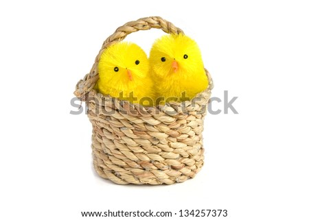 Family of yellow chicks in a basket isolated on white background - stock photo