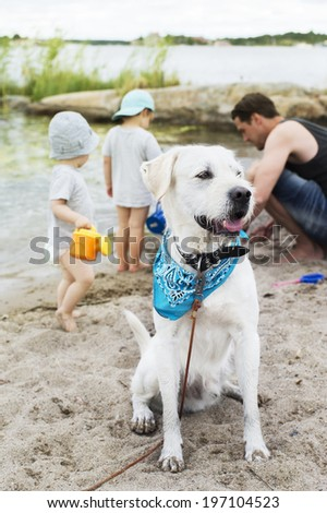 Family on beach, dog on foreground - stock photo