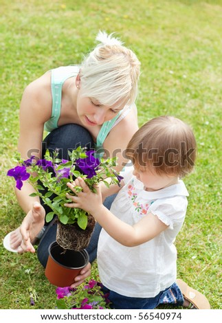 Family plant purple flowers in a flowerpot - stock photo