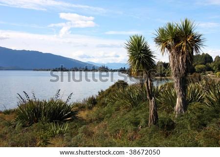 Famous Lake Te Anau on South Island, New Zealand. Cabbage tree palm - Cordyline australis. - stock photo