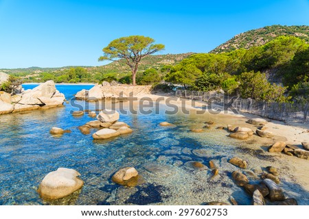 Famous Palombaggia beach with green pine tree, Corsica island, France - stock photo