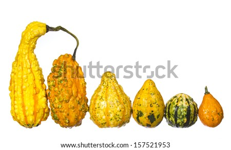 Fancy pumpkin collection isolated on white background. Unusually shaped squashes - stock photo