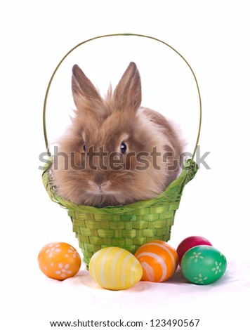 fancy rabbit in the basket and easter eggs isolated on white - stock photo