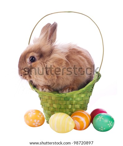 fancy rabbit in the basket and easter egss isolated on white - stock photo