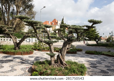 Fancy tree in a city park. Portugal. - stock photo