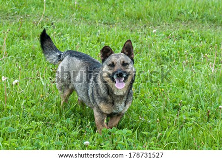 Fanny stray dog - stock photo