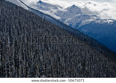 Fantastic aerial view of an Alpine forrest located on Blackcomb Mountain, British Columbia - stock photo