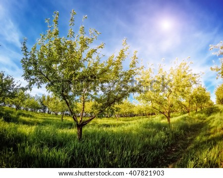 Fantastic apple orchard is illuminated by sunlight and blue sky. Picturesque and gorgeous scene. Location place Ukraine, Europe. Beauty world. Instagram toning effect. Glowing soft filter. - stock photo