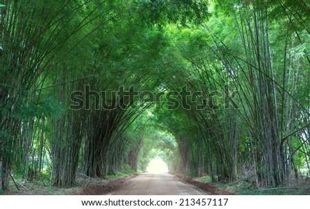 Fantastic bamboo Trees Tunnel - stock photo