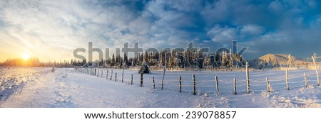 fantastic blue sky and snow-covered trees in the mountains  - stock photo