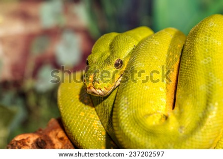 fantastic close-up portrait Green rattlesnake (poisonous Green Snake). Selective focus, shallow depth of field - stock photo